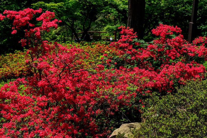 新緑と春の花々(石山寺)_f0155048_2312384.jpg