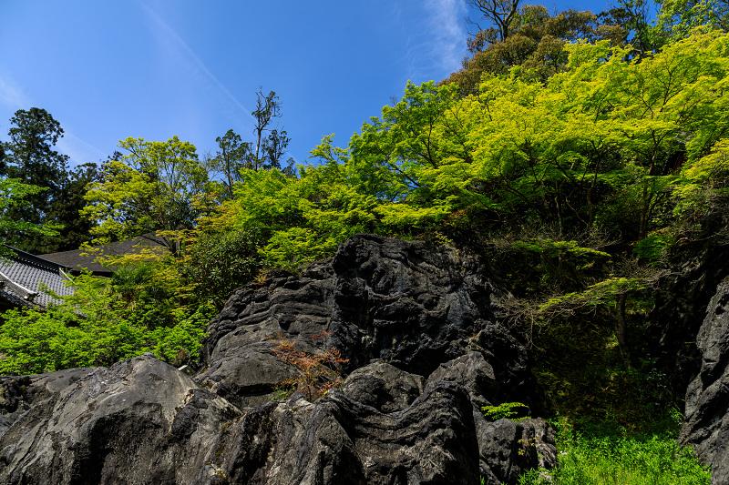 新緑と春の花々(石山寺)_f0155048_23225064.jpg