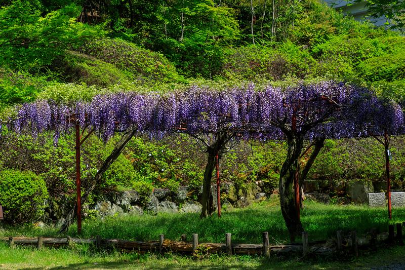 新緑と春の花々(石山寺)_f0155048_2322691.jpg