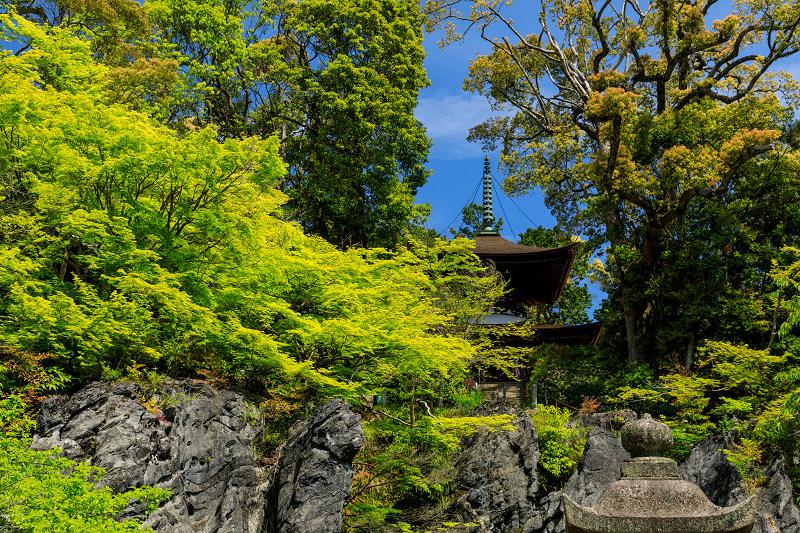 新緑と春の花々(石山寺)_f0155048_2323416.jpg