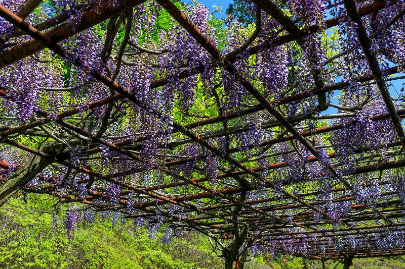 新緑と春の花々(石山寺)_f0155048_2332167.jpg