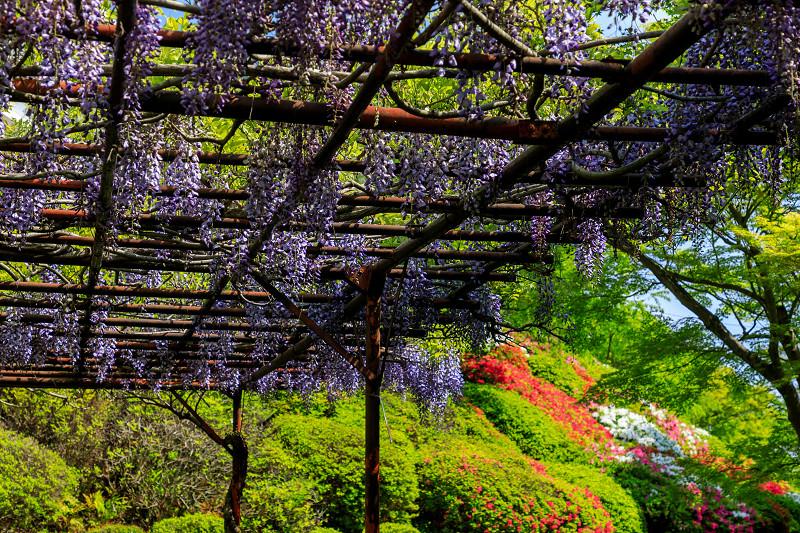 新緑と春の花々(石山寺)_f0155048_233383.jpg