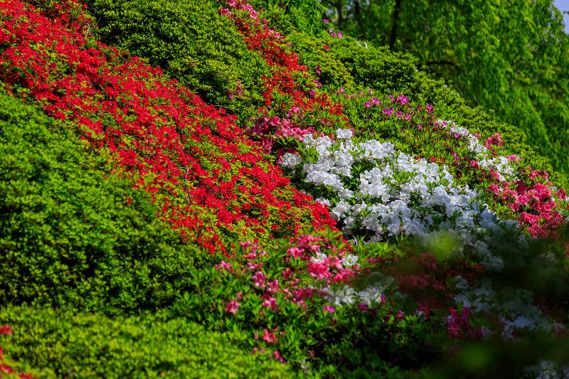 新緑と春の花々(石山寺)_f0155048_2395175.jpg