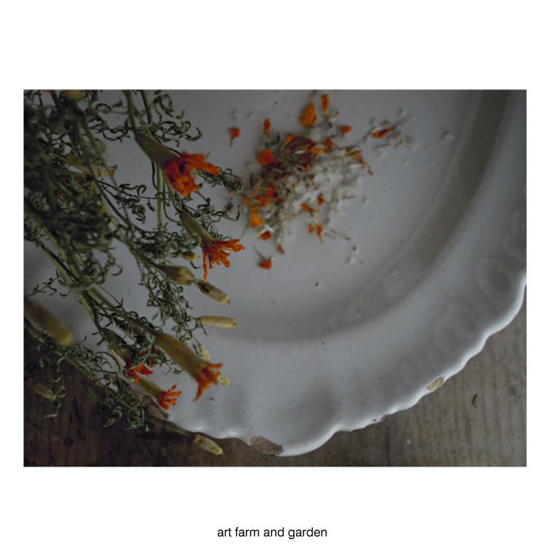 マリーゴールド・ソルト/art farm & garden_b0290469_10250615.jpg