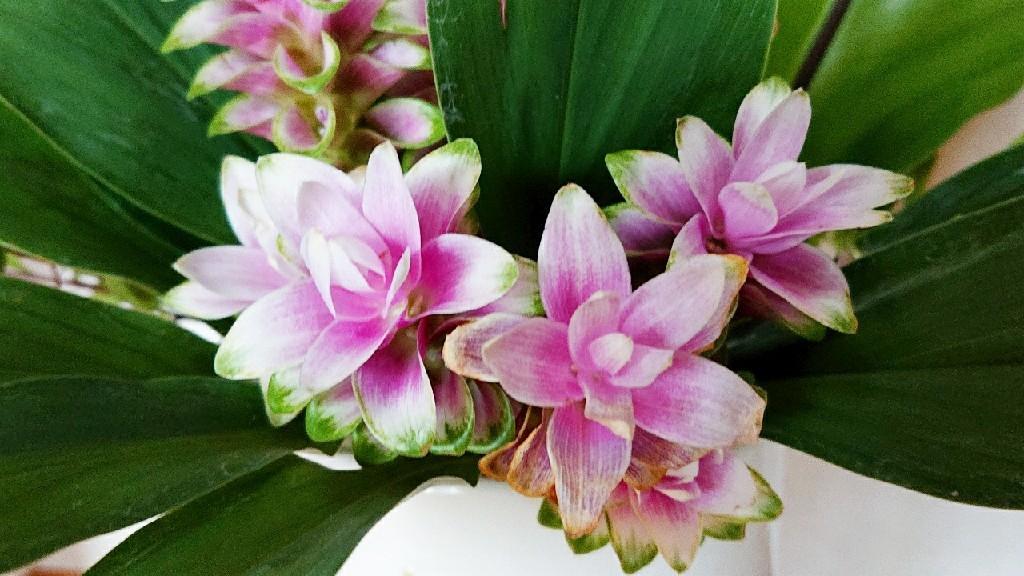 豊かな個性の集いと開花***_e0290872_21484916.jpg