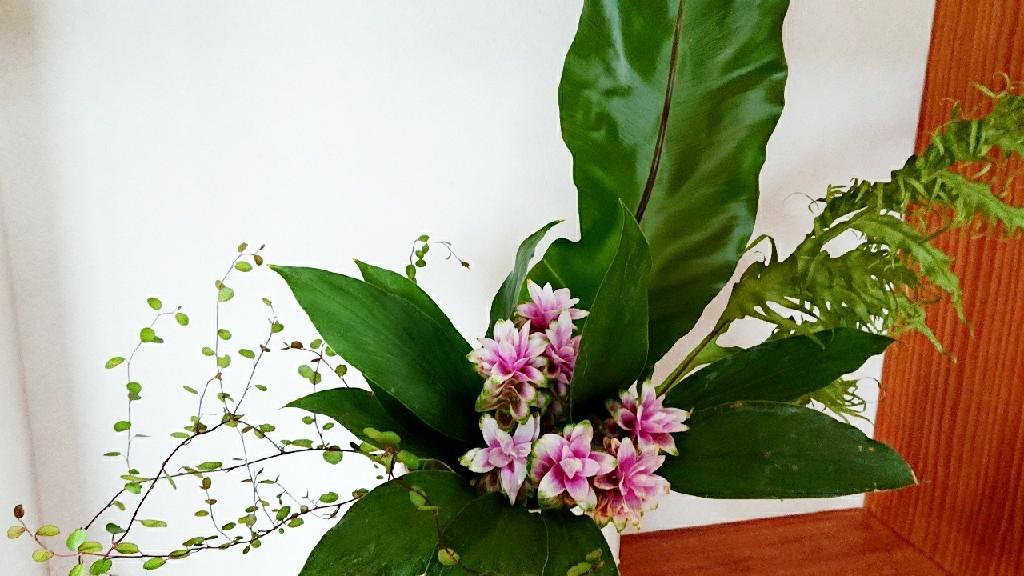 豊かな個性の集いと開花***_e0290872_21485048.jpg