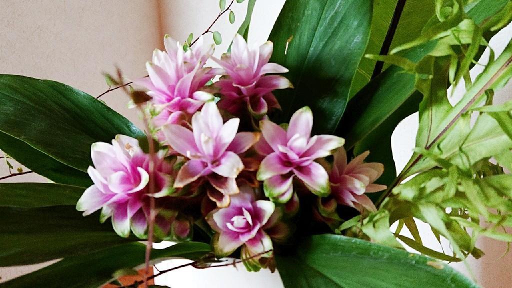 豊かな個性の集いと開花***_e0290872_21503171.jpg