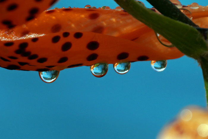 水滴・・・2_d0162994_08273667.jpg