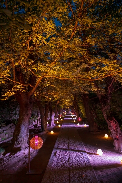かまくら長谷の灯かり2019 御霊神社・極楽寺・収玄寺のライトアップ_b0145398_21303815.jpg