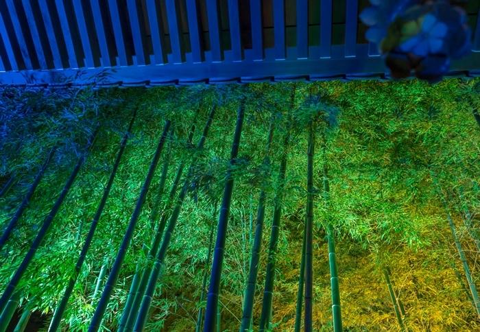 かまくら長谷の灯かり2019 鎌倉大仏殿高徳院・光則寺・長谷寺のライトアップ_b0145398_22074836.jpg