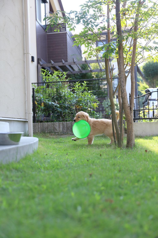 朝のお庭♪_b0275998_10104537.jpg