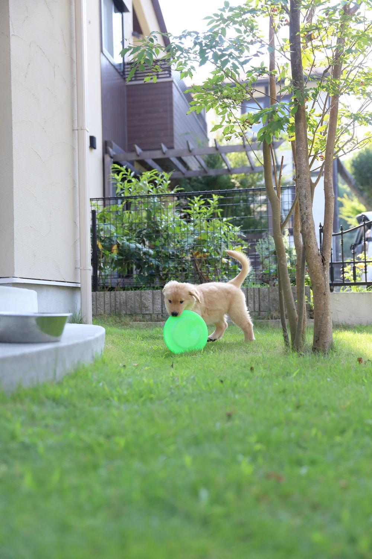 朝のお庭♪_b0275998_10115164.jpg