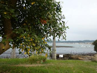 朝RUNの秋の風とさいごのトマト_c0195909_11321525.jpg
