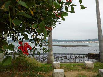 朝RUNの秋の風とさいごのトマト_c0195909_11322924.jpg