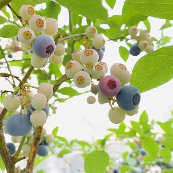 今年の収穫♪_f0241925_17410526.jpeg
