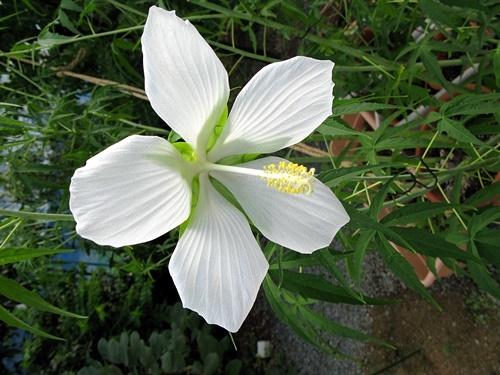 八月の庭_f0129726_20130866.jpg