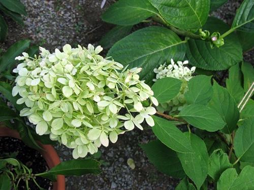 八月の庭_f0129726_20131395.jpg