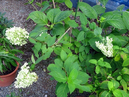 八月の庭_f0129726_20131591.jpg