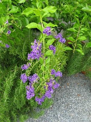 八月の庭_f0129726_20131880.jpg
