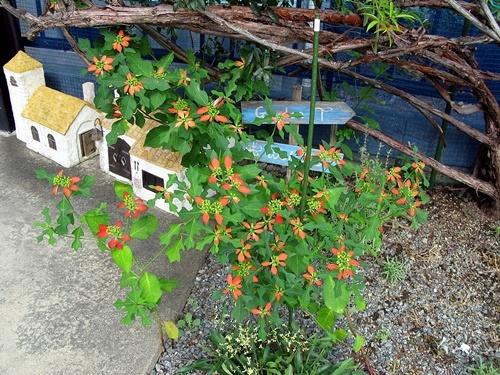 八月の庭_f0129726_20132938.jpg