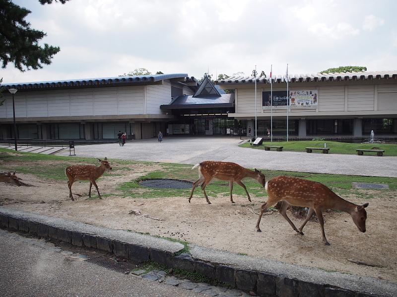 【奈良国立博物館】すごくよかった!「いのりの世界のどうぶつえん」展_b0008655_23363916.jpg