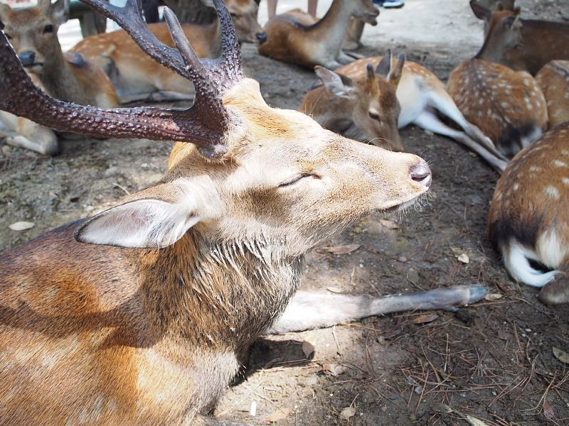 【奈良国立博物館】すごくよかった!「いのりの世界のどうぶつえん」展_b0008655_23485197.jpg