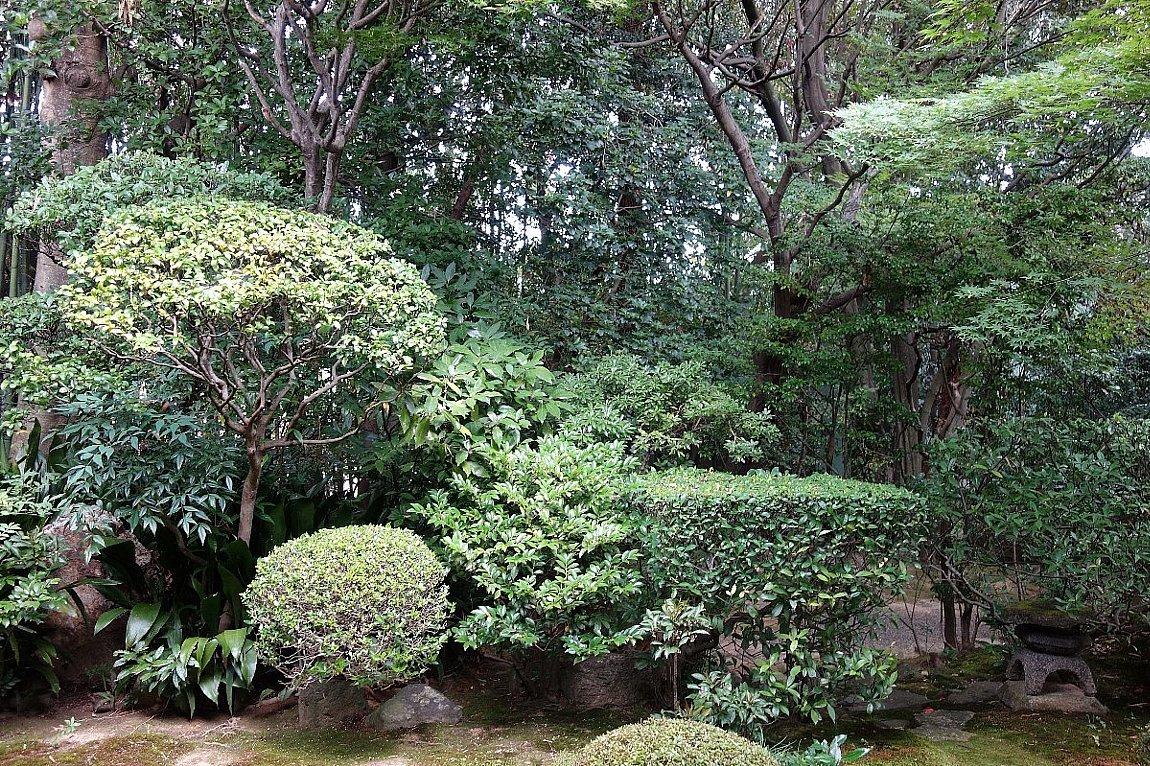 妙心寺 桂春院(その2)思惟の庭と真如の庭_c0112559_08151444.jpg