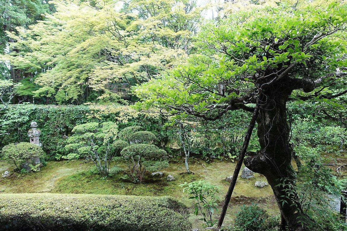 妙心寺 桂春院(その2)思惟の庭と真如の庭_c0112559_08192044.jpg