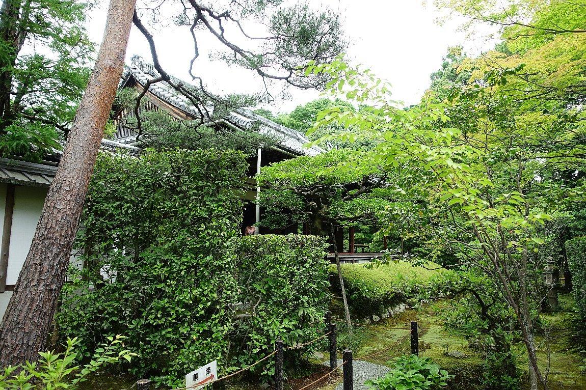 妙心寺 桂春院(その2)思惟の庭と真如の庭_c0112559_08201077.jpg