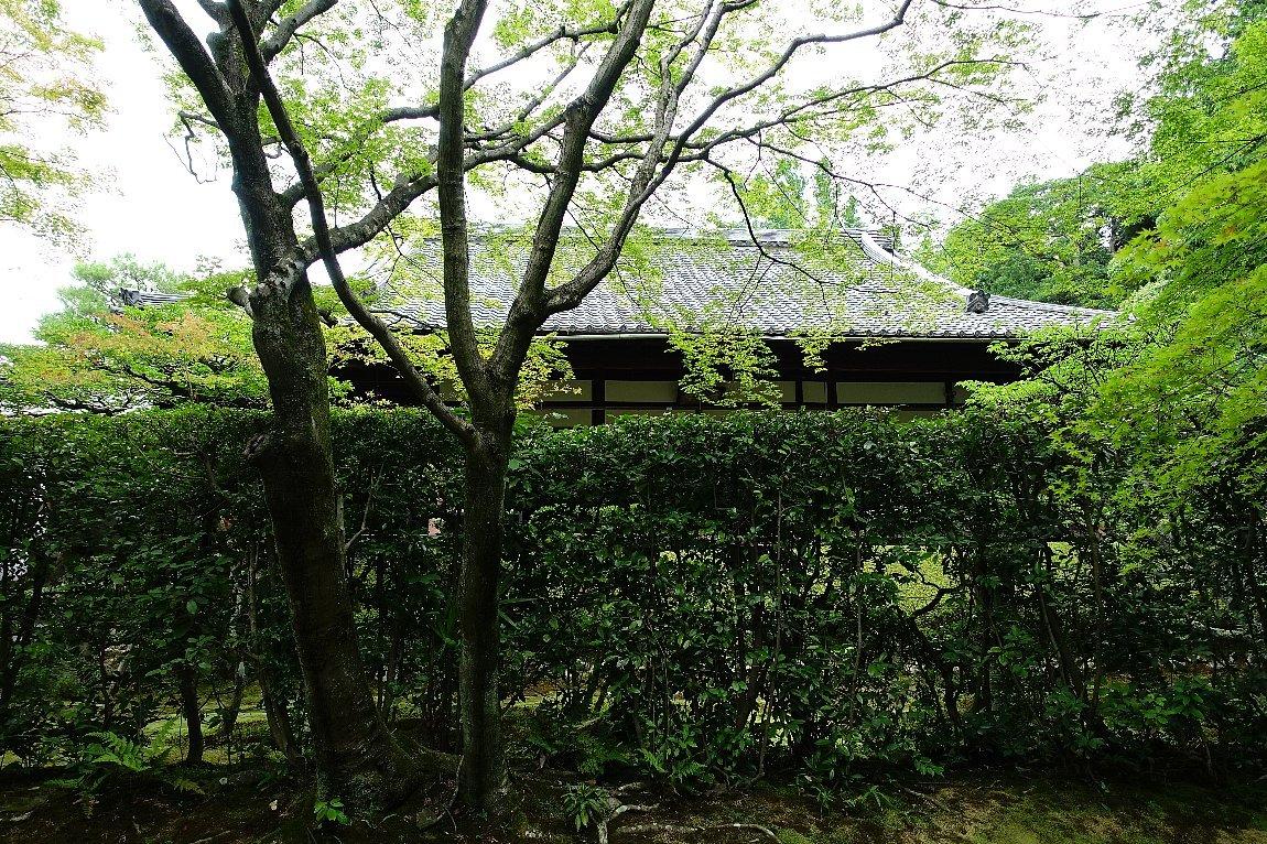 妙心寺 桂春院(その2)思惟の庭と真如の庭_c0112559_08222650.jpg