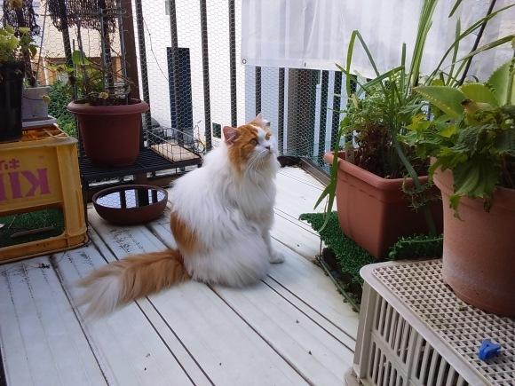 今夏もレモングラスは猫に噛られ、。_d0116059_17153673.jpg
