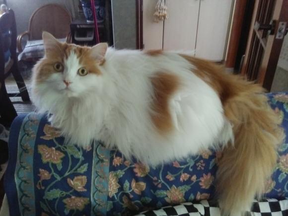 今夏もレモングラスは猫に噛られ、。_d0116059_17250260.jpg