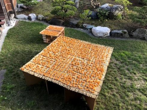 梅の大豊作、梅干しへ_c0189970_14224241.jpg