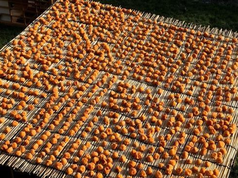 梅の大豊作、梅干しへ_c0189970_14224917.jpg