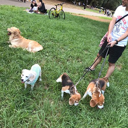 犬友に会う_b0035072_15300285.jpg