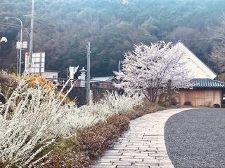 RICO YUZEN, Asian Tour, Spring 2019 ! Part 1_a0385974_19474675.jpg