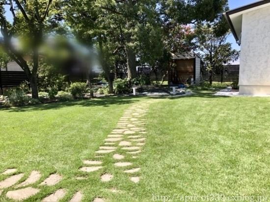 晩夏の庭しごと 芝生のお手入れと草抜き_c0293787_14455992.jpg