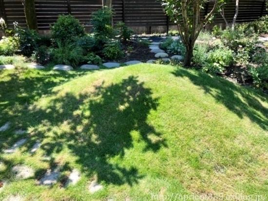 晩夏の庭しごと 芝生のお手入れと草抜き_c0293787_14473715.jpg