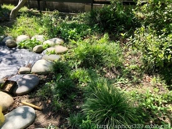 晩夏の庭しごと 芝生のお手入れと草抜き_c0293787_14495197.jpg