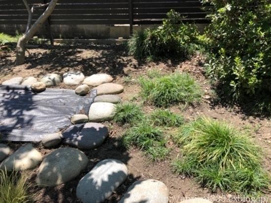 晩夏の庭しごと 芝生のお手入れと草抜き_c0293787_14503710.jpg