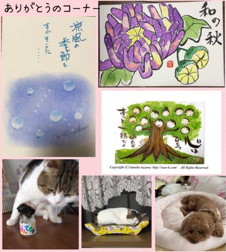 カルちゃんきららちゃん ハナモモちゃん_f0375804_20251211.jpg