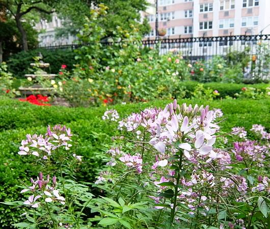 NYグリニッジ・ビレッジの隠れ家的ガーデン、Jefferson Market Garden_b0007805_02390450.jpg