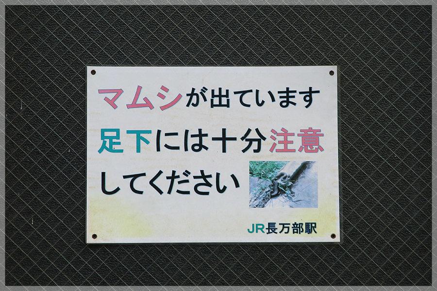 そろそろ小幌(その2)_e0235910_13150968.jpg