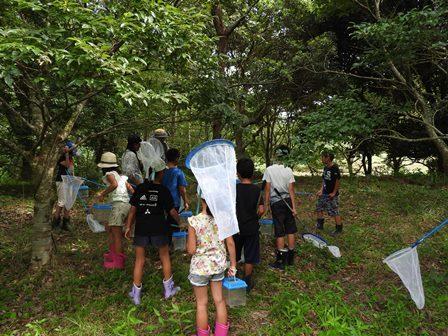 昆虫採集と竹とんぼ_a0123836_16223861.jpg