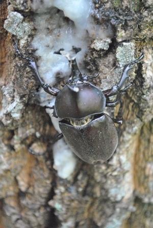 昆虫採集と竹とんぼ_a0123836_16225089.jpg