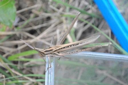 昆虫採集と竹とんぼ_a0123836_16235926.jpg