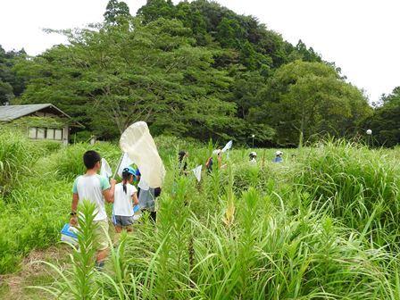昆虫採集と竹とんぼ_a0123836_16242996.jpg
