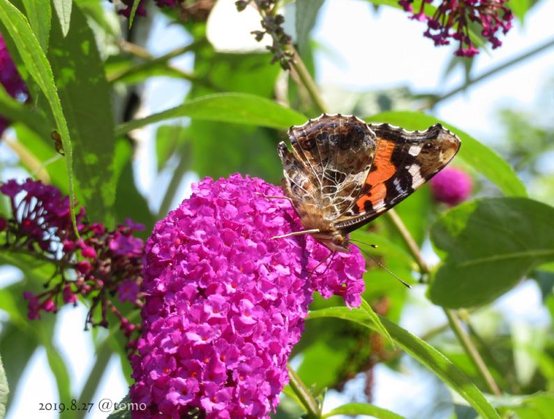 夏空に蝶々_f0067179_22053178.jpg