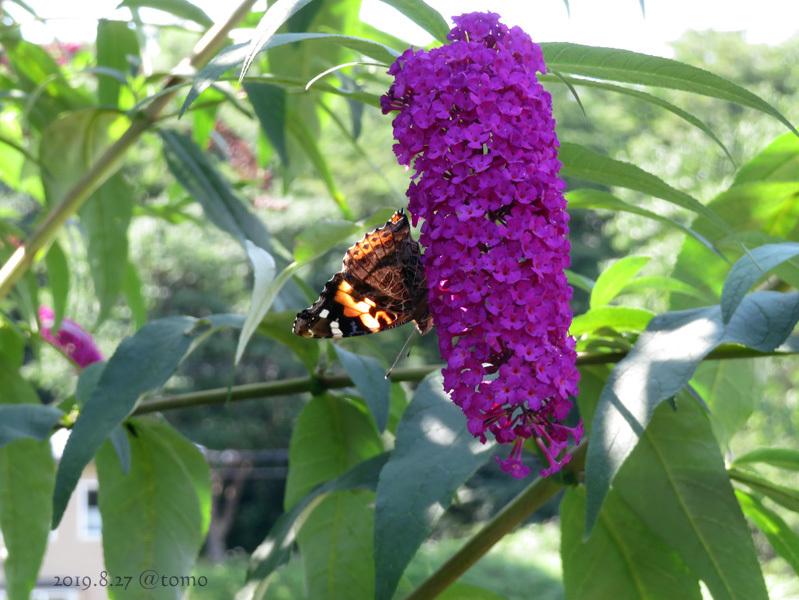 夏空に蝶々_f0067179_22054037.jpg