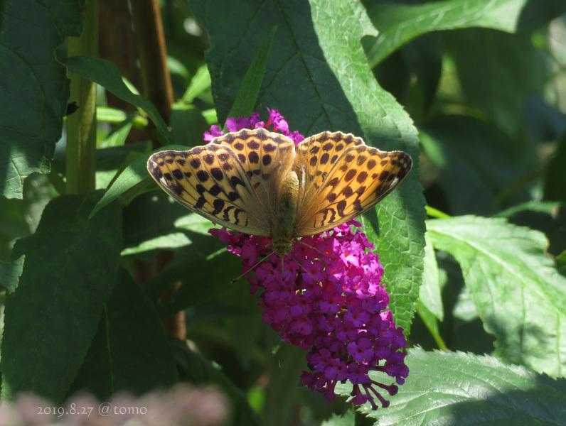 夏空に蝶々_f0067179_22055542.jpg